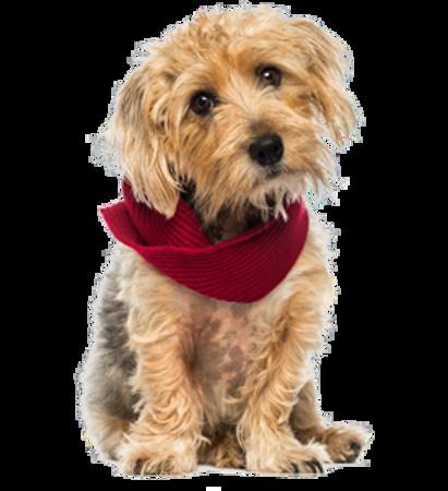 Bild für Kategorie Lucas Terrier
