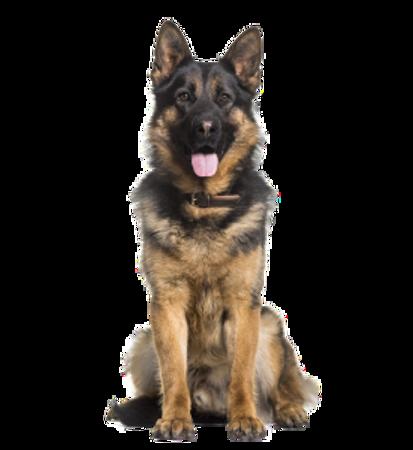 Bild für Kategorie Deutscher Schaeferhund